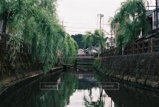 木と川と川にかかる橋の写真・画像素材[4360004]