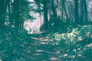 森の中の小道の写真・画像素材[4360006]
