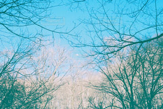 木々から見える日中の小さな月の写真・画像素材[4360008]