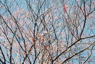 花のつぼみ達の写真・画像素材[4360014]