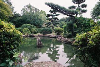 庭園の池と松の写真・画像素材[4360046]