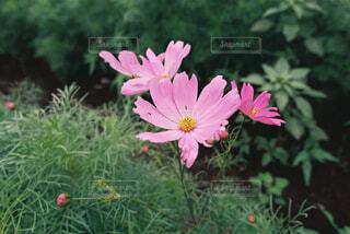 植物の上のピンクの花の写真・画像素材[4360049]