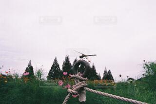コスモス畑の中のトンボの写真・画像素材[4360047]