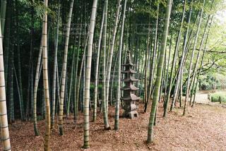 竹林の写真・画像素材[4360053]