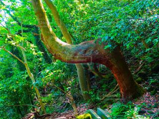 木の写真・画像素材[4362825]