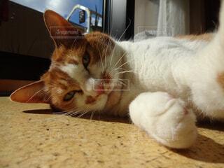 自撮り猫の写真・画像素材[4362823]