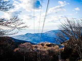 背景に山のある木の写真・画像素材[4362816]