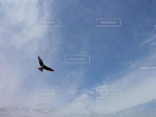 空飛ぶ鳥の写真・画像素材[4362818]