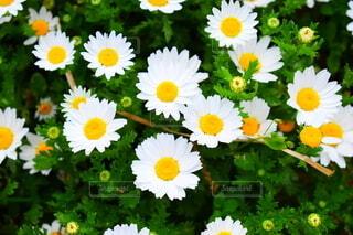 花,春,庭,草木,日中,庭先