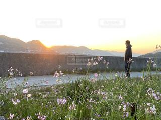 自然,空,花,春,屋外,朝日,山,草木,目覚め