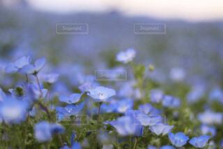 自然,花,草木