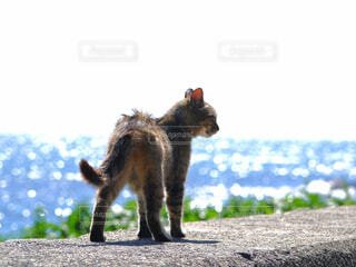 猫,海,動物,屋外,水面,キラキラ,地面,黒猫