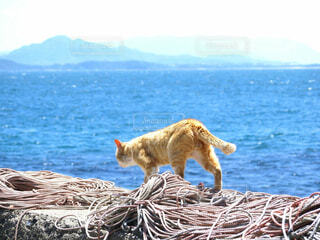 猫,風景,海,空,動物,屋外,水面