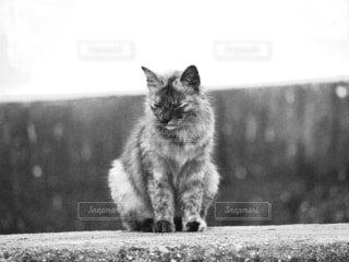 猫,風景,動物,雨,屋外,座る