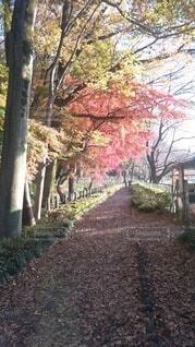 秋,屋外,樹木,草木