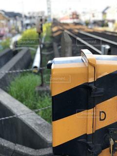 春,電車,菜の花,日常,生活,鉄道,踏切