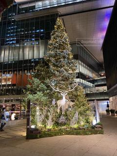 東京,緑,樹木,イルミネーション,都会,キラキラ,クリスマス,紀尾井町,クリスマス ツリー