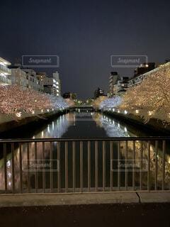空,建物,桜,夜,橋,夜景,屋外,湖,ピンク,水面,反射,都会,ライトアップ,高層ビル,明るい,街路灯