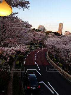 風景,空,建物,花,春,夜,屋外,神社,夕焼け,道路,樹木,道,建築,晴れた日,ブルーム