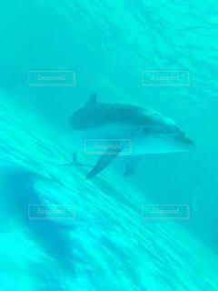 イルカの写真・画像素材[4378563]