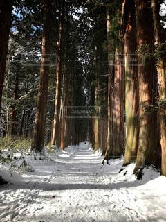 自然,風景,森林,雪,屋外,樹木,パワースポット,険しい道のり