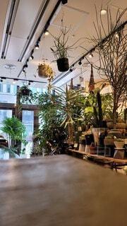 カフェ,観葉植物,落ち着く,ダウンライト