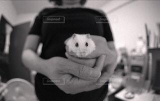 動物,ハムスター,屋内,人物,人,赤ちゃん,ラット,マウス,ネズミ,ウサギ