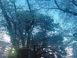 空と桜とビルの写真・画像素材[4375632]