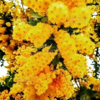 花,黄色,樹木