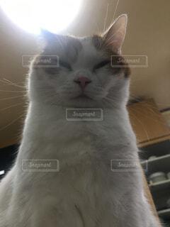 猫,動物,屋内,かわいい,子猫,座る,ネコ科