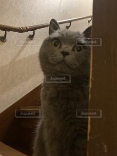 猫,動物,屋内,子猫,壁,見つめる,ネコ科,探す