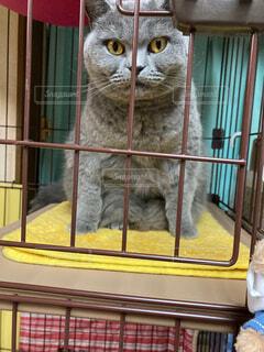 猫,動物,子猫,かわいい猫,ネコ科,どんとこい