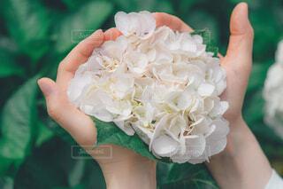 花を持つ手の写真・画像素材[4362884]