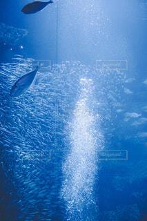 京都水族館の写真・画像素材[4363095]