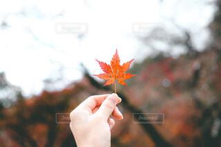 紅葉🍁の写真・画像素材[4363096]