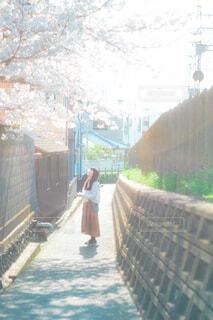 春の散歩の写真・画像素材[4363271]