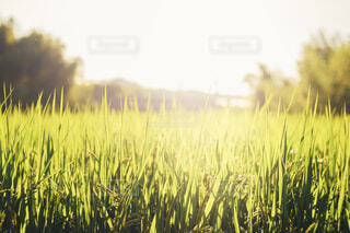 夏の夕日の写真・画像素材[4363268]