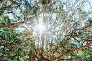 森の中の木の写真・画像素材[4426306]