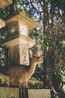 森の前に立っている鹿の写真・画像素材[4426309]