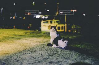 猫の写真・画像素材[4426369]