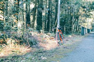 森の中の土の道の写真・画像素材[4464894]