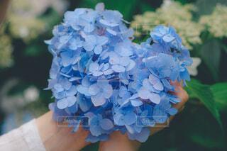 花のクローズアップの写真・画像素材[4559821]