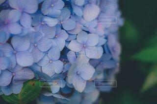 花のクローズアップの写真・画像素材[4559820]