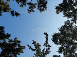 空,屋外,樹木,草木
