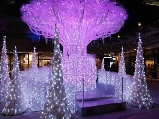 屋内,ピンク,紫,照明,明るい,クリスマス ツリー