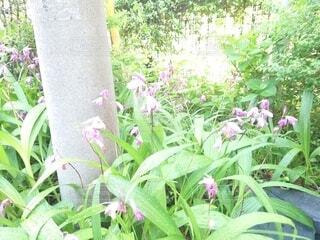 花,ピンク,電信柱,草木,小さい小さい花