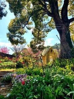 秘密の花園の写真・画像素材[4363491]
