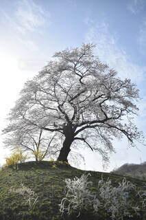 自然,空,屋外,雲,樹木,草木,ウィロー