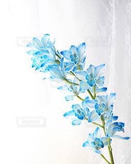 空,花,屋外,雲,室内,水色,樹木,草木,珍しい花,シンビジウム,定期便