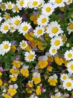 隅田川で見つけた花3の写真・画像素材[4381224]